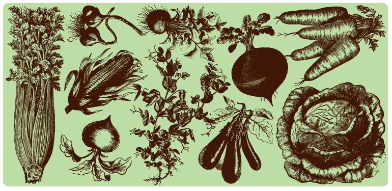 drawings of vegetables