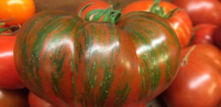 Tomato in produce